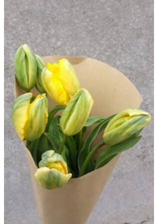 "Bouquet de Tulipes ""Perroquet"""